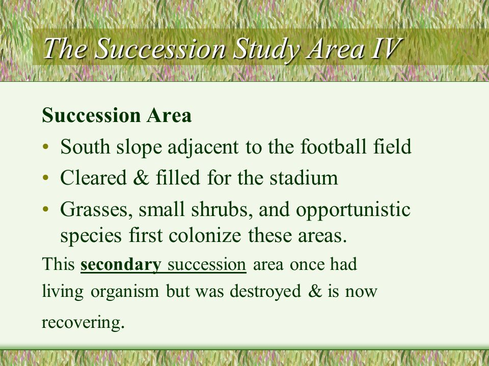 The Succession Study Area IV