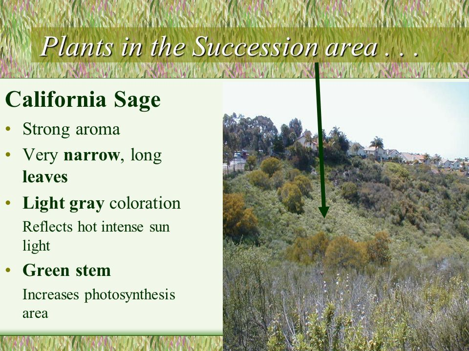 Plants in the Succession area . . .