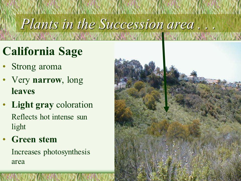Plants in the Succession area . . .