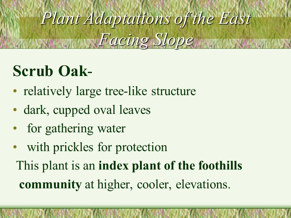 Plant Adaptations of the East Facing Slope