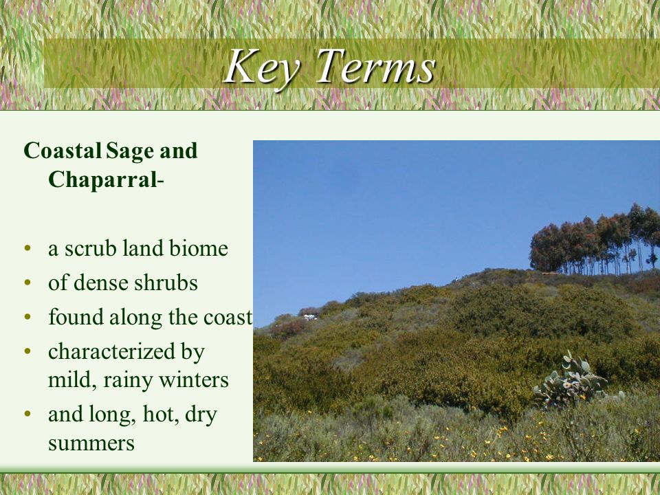 Key Terms Coastal Sage and Chaparral- a scrub land biome