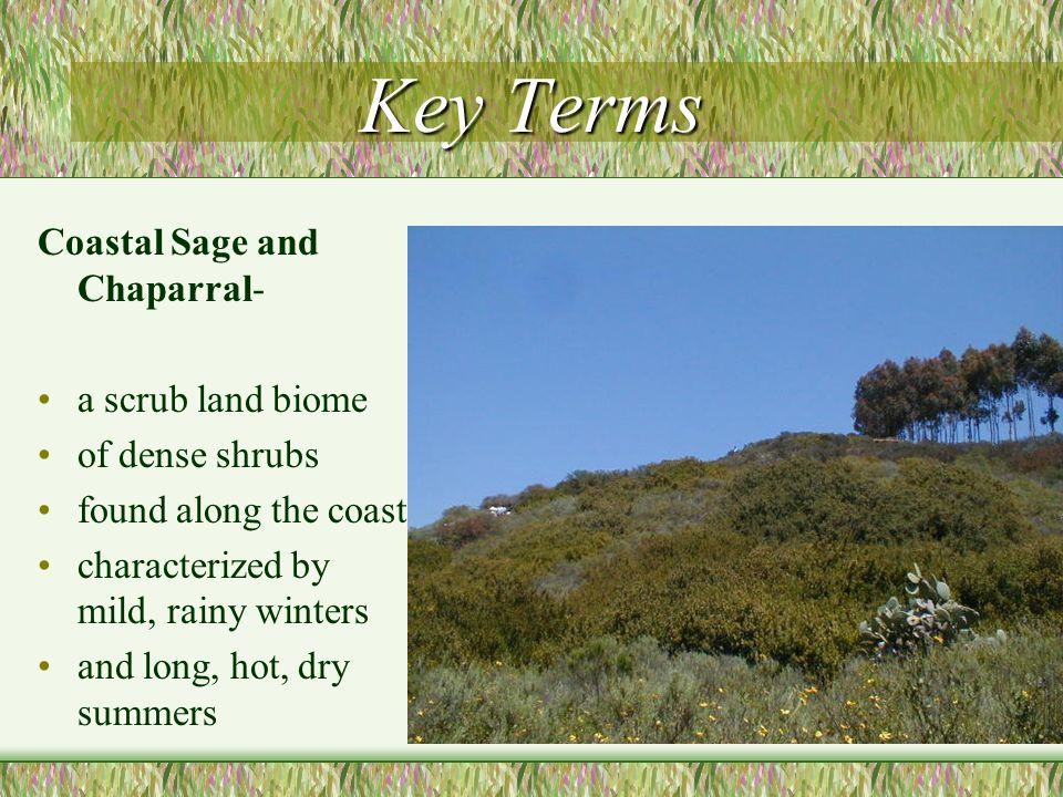 Key Terms Coastal Sage and Chaparral- a scrub land biome