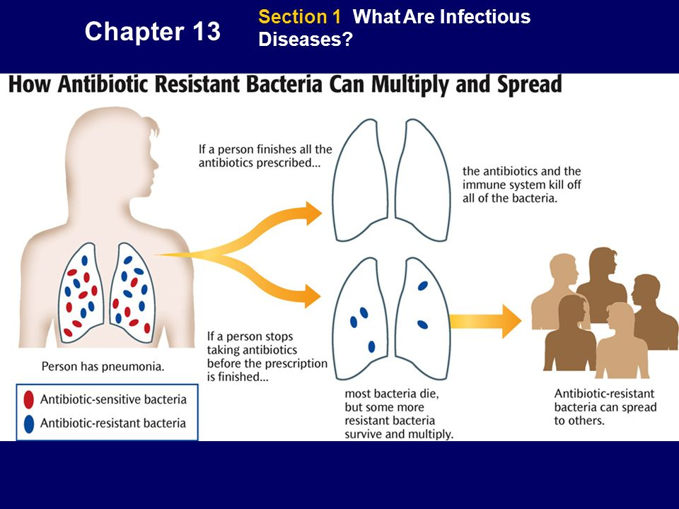Chapter 13 Section 1 What Are Infectious Diseases