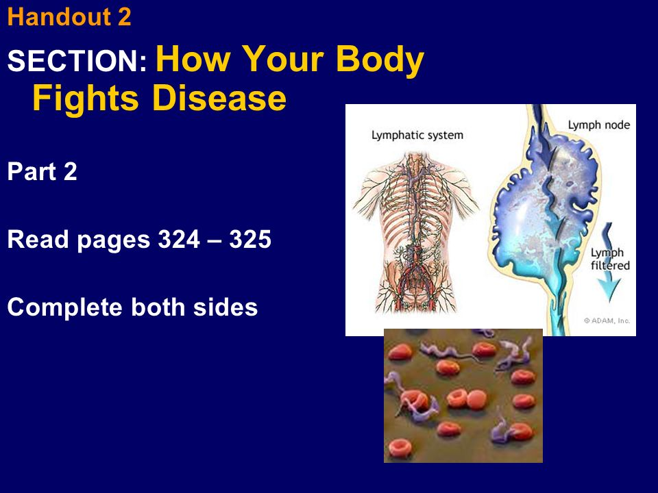 SECTION: How Your Body Fights Disease