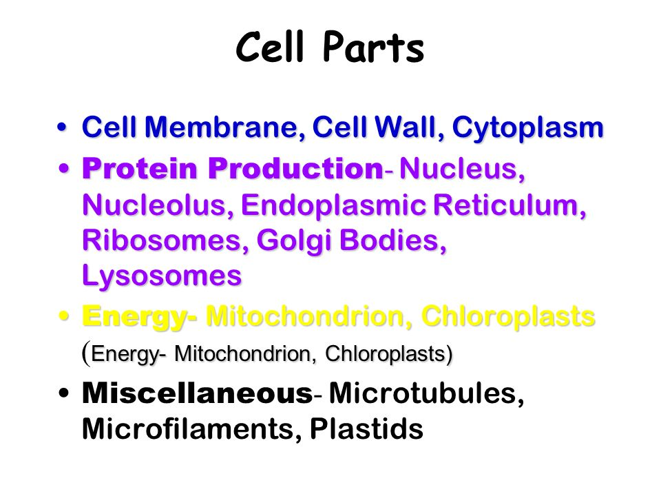 Cell Parts Cell Membrane, Cell Wall, Cytoplasm