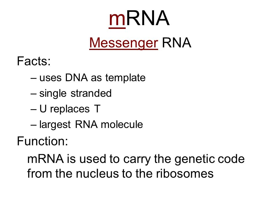 mRNA Messenger RNA Facts: Function: