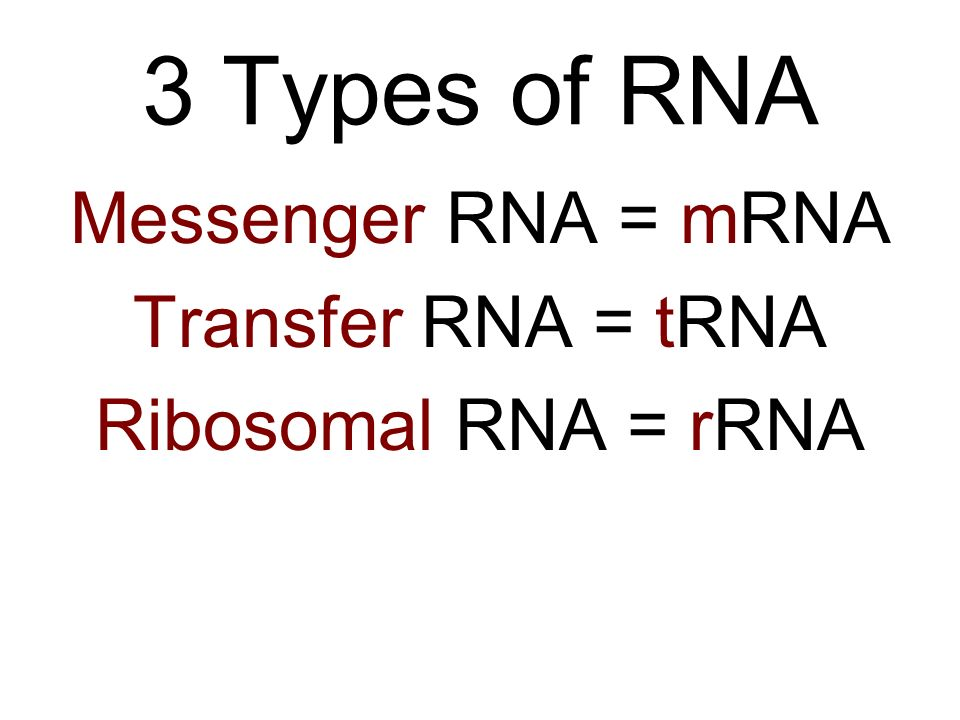 3 Types of RNA Messenger RNA = mRNA Transfer RNA = tRNA