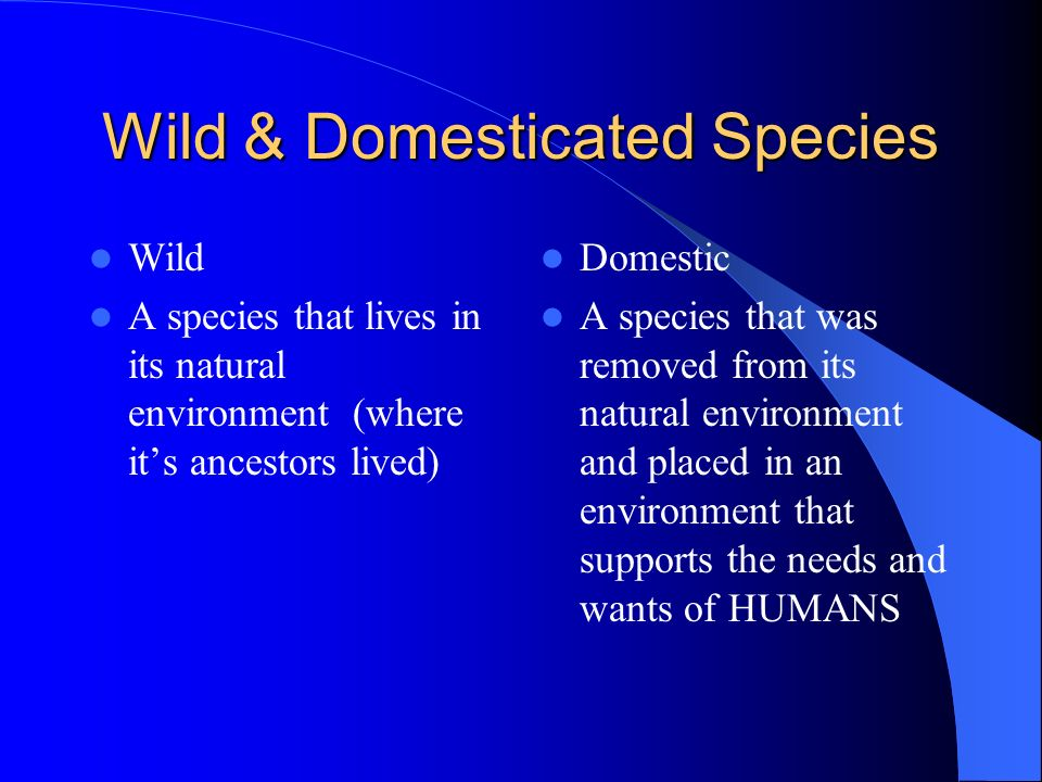 Wild & Domesticated Species