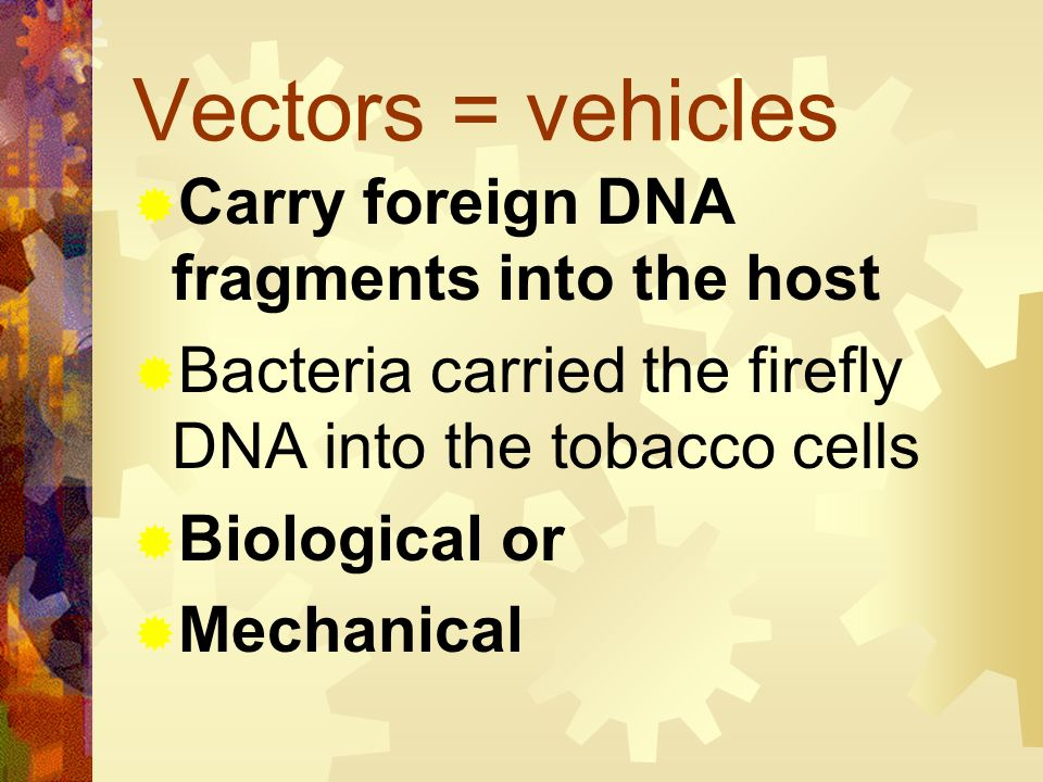 Vectors = vehicles Carry foreign DNA fragments into the host