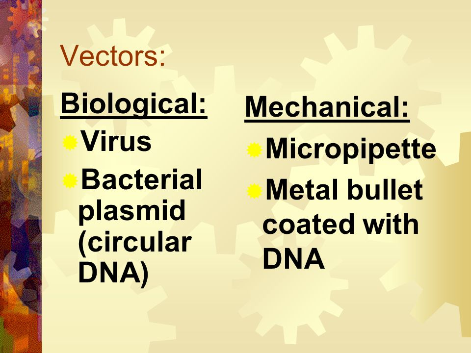Vectors: Biological: Virus. Bacterial plasmid (circular DNA) Mechanical: Micropipette.