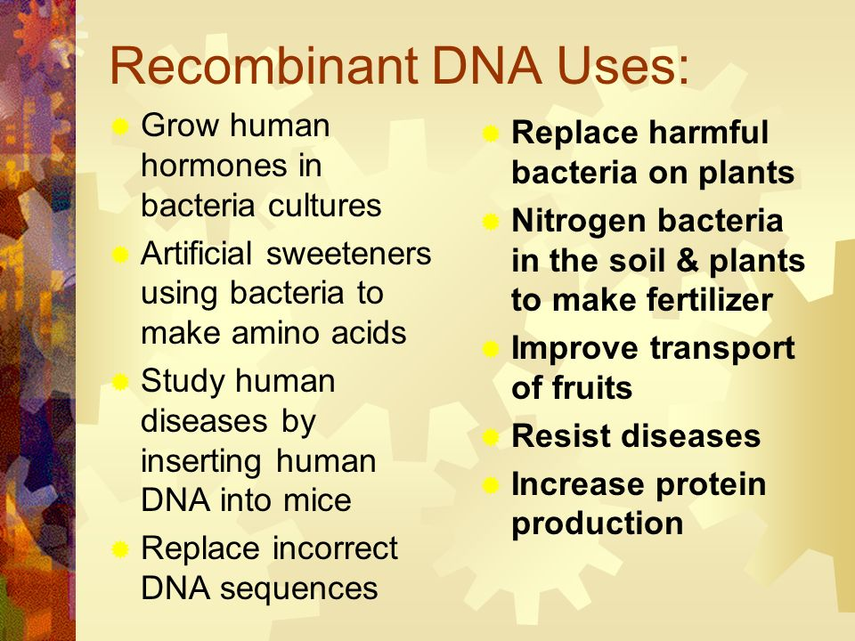Recombinant DNA Uses: Grow human hormones in bacteria cultures