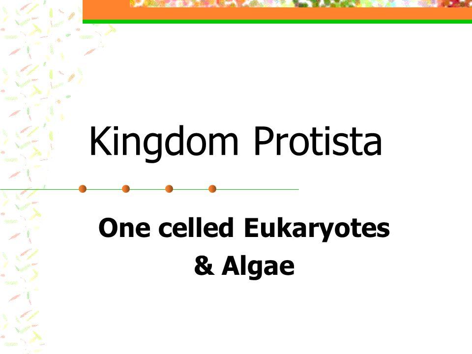 One celled Eukaryotes & Algae