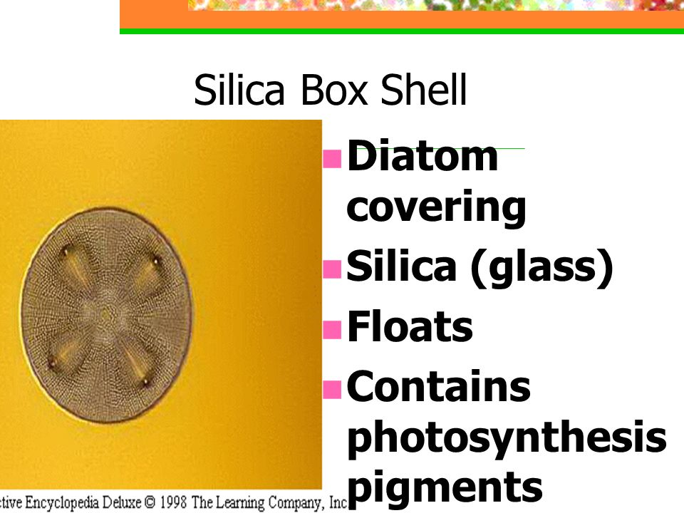 Silica Box Shell Diatom covering Silica (glass) Floats Contains photosynthesis pigments