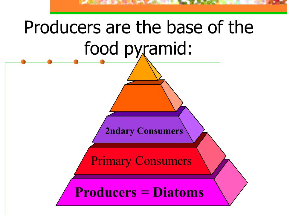 Producers are the base of the food pyramid: