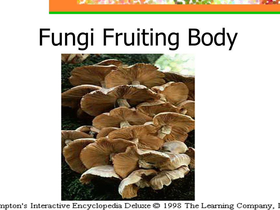 Fungi Fruiting Body