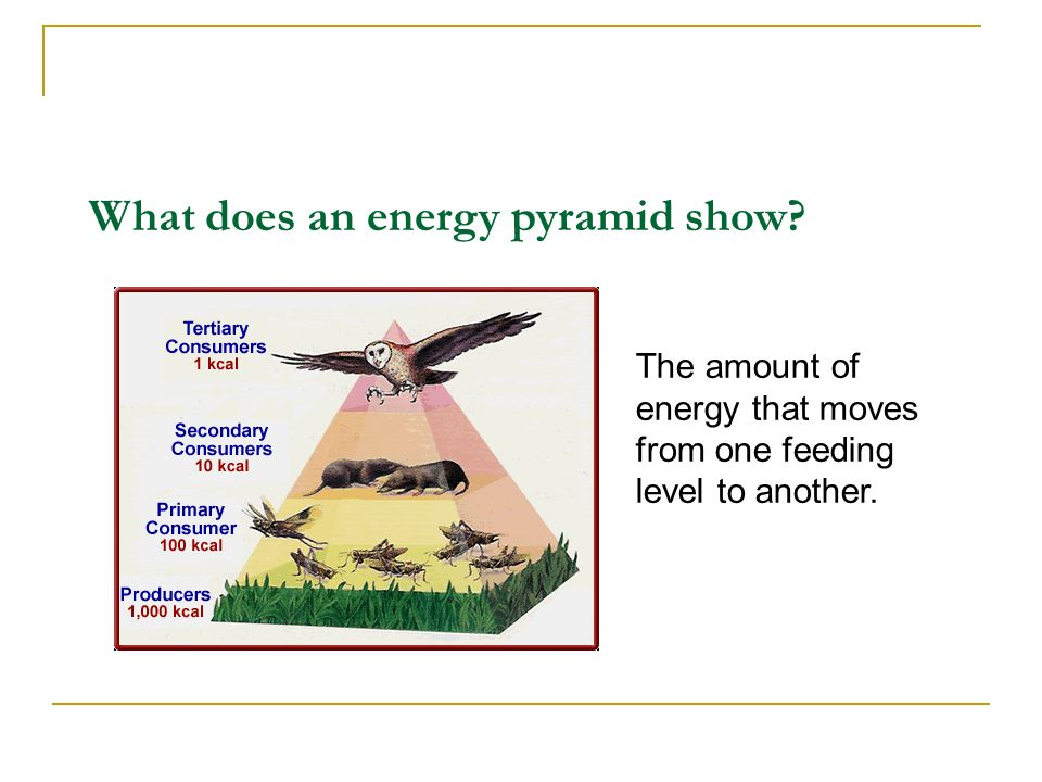 What does an energy pyramid show