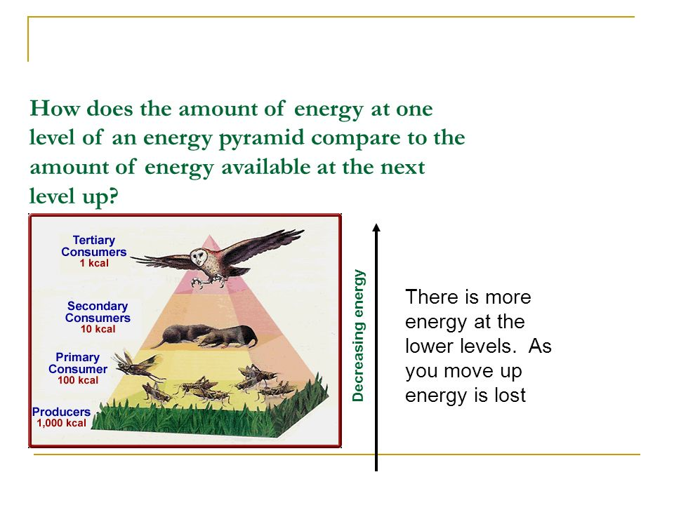 How does the amount of energy at one level of an energy pyramid compare to the amount of energy available at the next level up