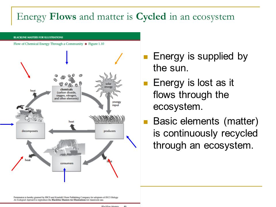 Energy Flows and matter is Cycled in an ecosystem