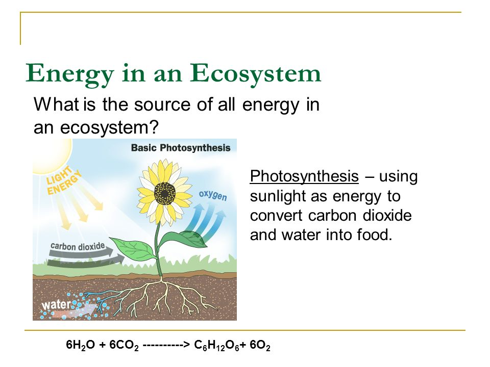 Energy in an Ecosystem What is the source of all energy in an ecosystem