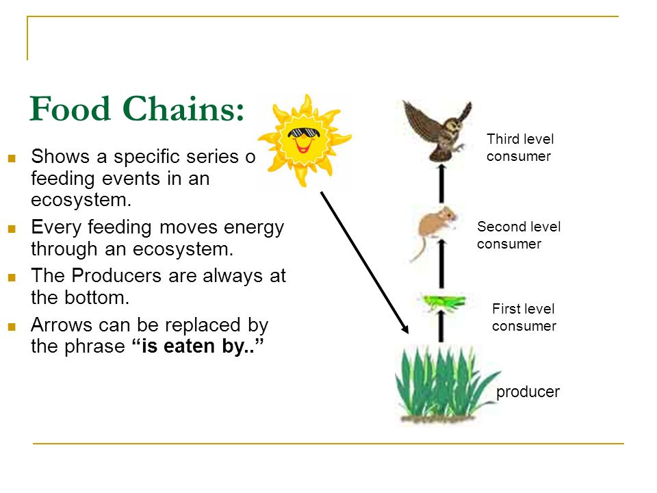 Food Chains: Third level. consumer. Shows a specific series of feeding events in an ecosystem. Every feeding moves energy through an ecosystem.