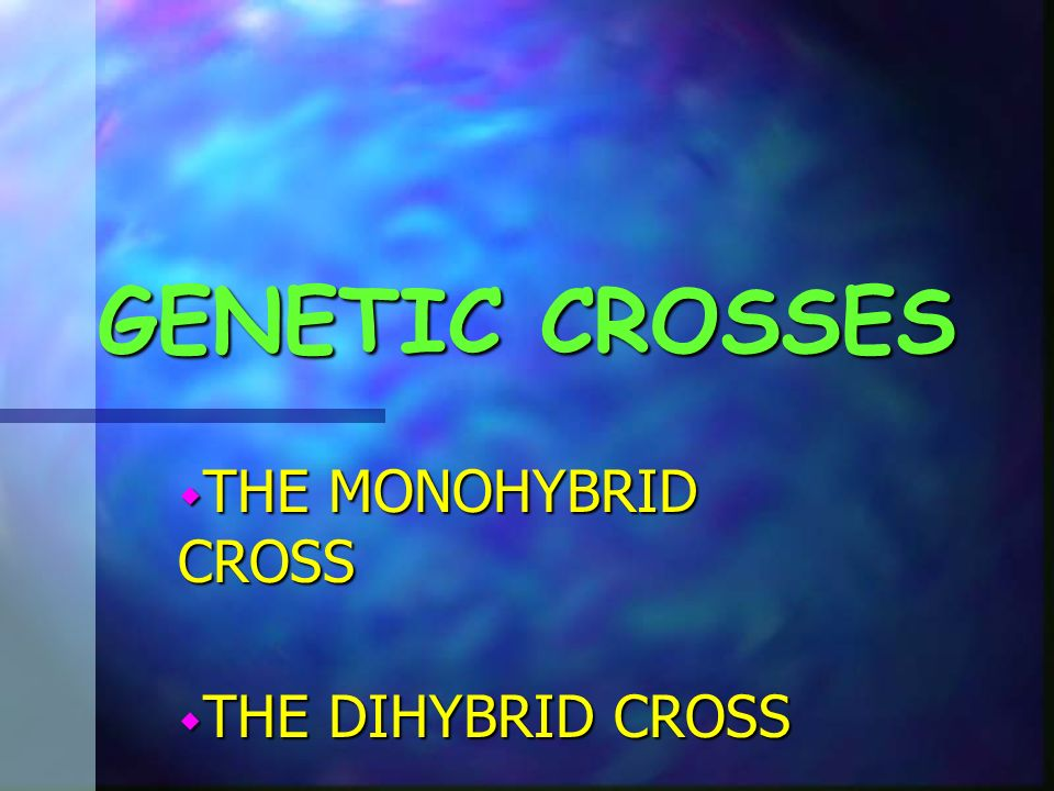 THE MONOHYBRID CROSS THE DIHYBRID CROSS