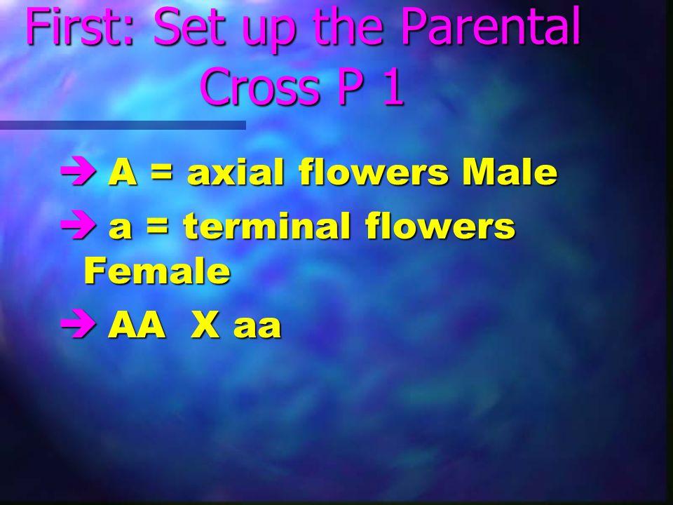 First: Set up the Parental Cross P 1