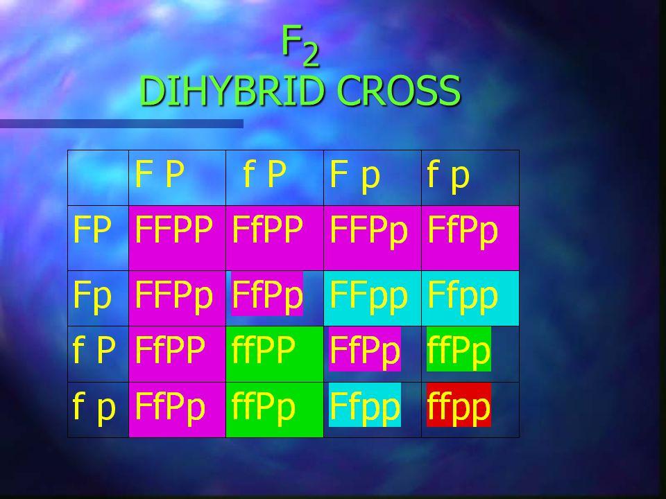F2 DIHYBRID CROSS