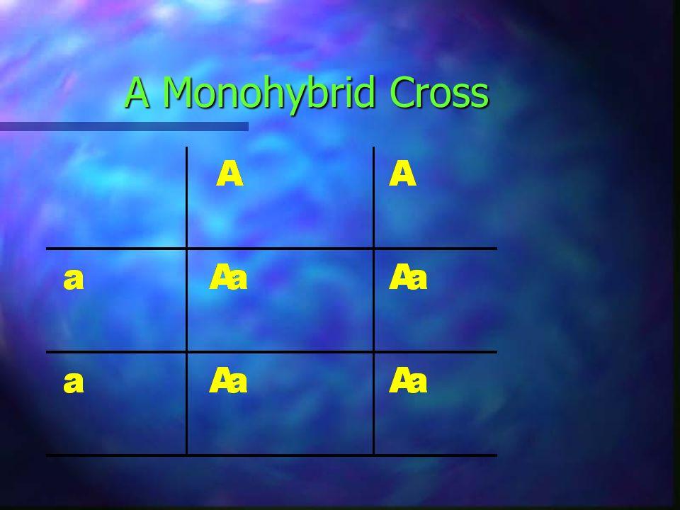 A Monohybrid Cross