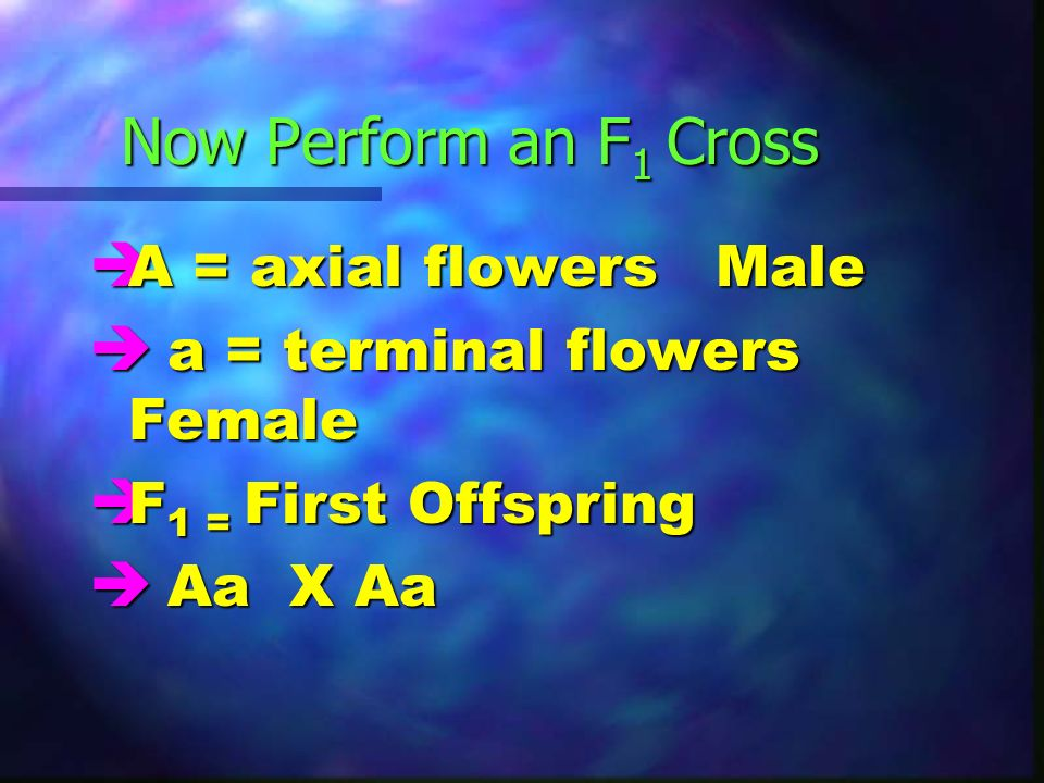 Now Perform an F1 Cross A = axial flowers Male