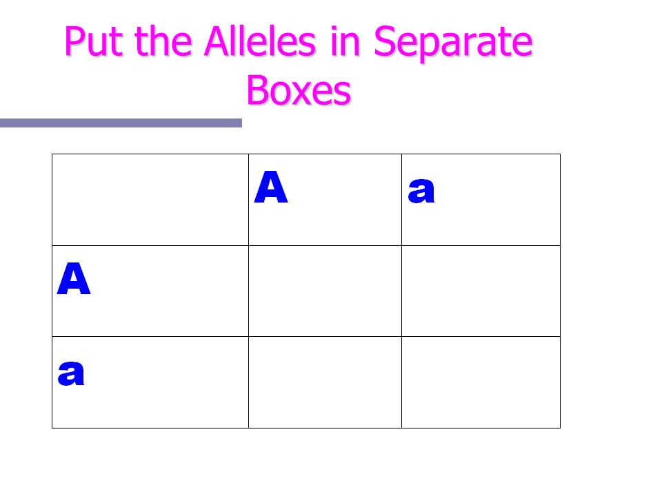 Put the Alleles in Separate Boxes