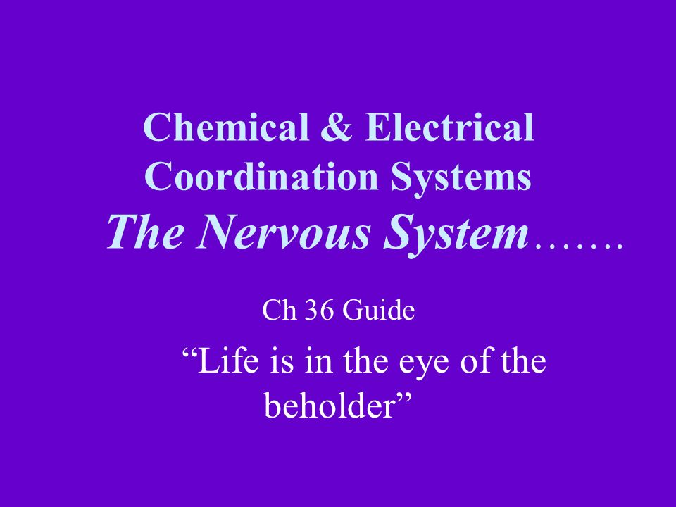 Chemical & Electrical Coordination Systems The Nervous System…….