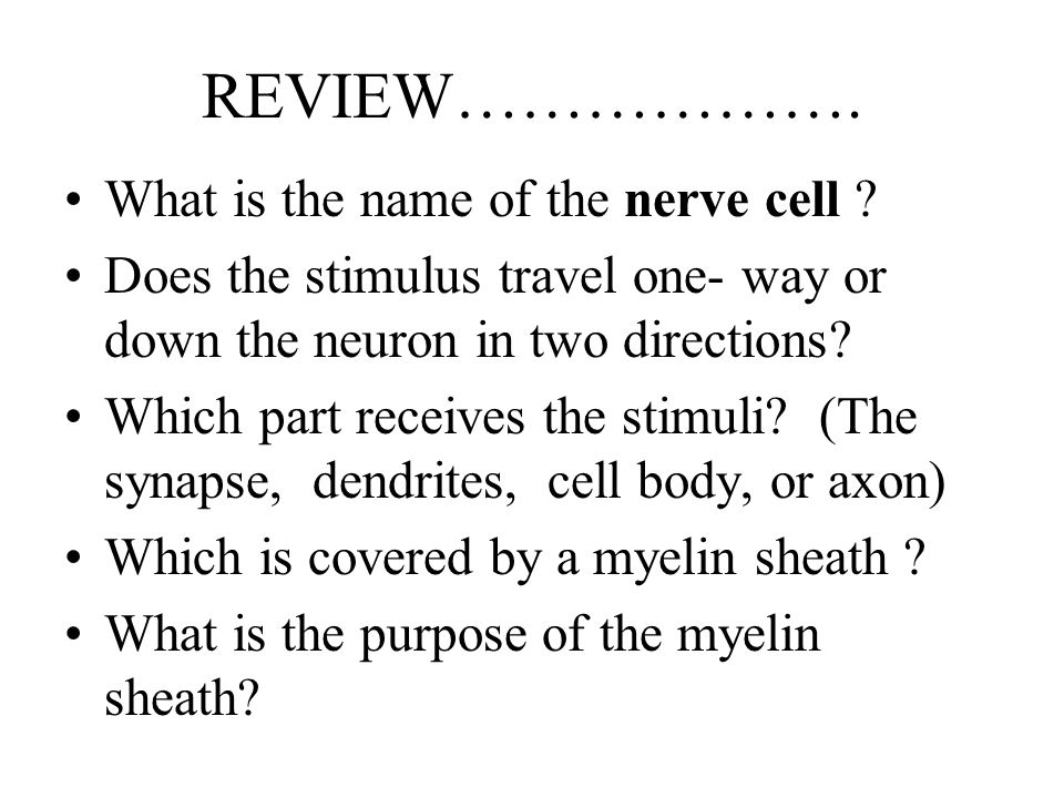 REVIEW………………. What is the name of the nerve cell
