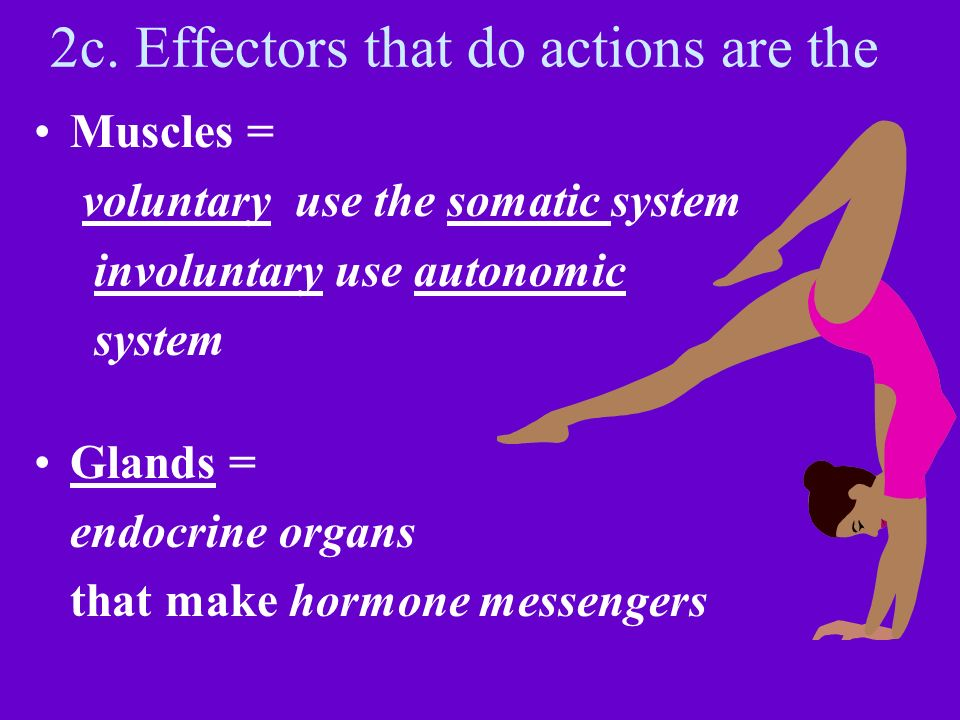 2c. Effectors that do actions are the