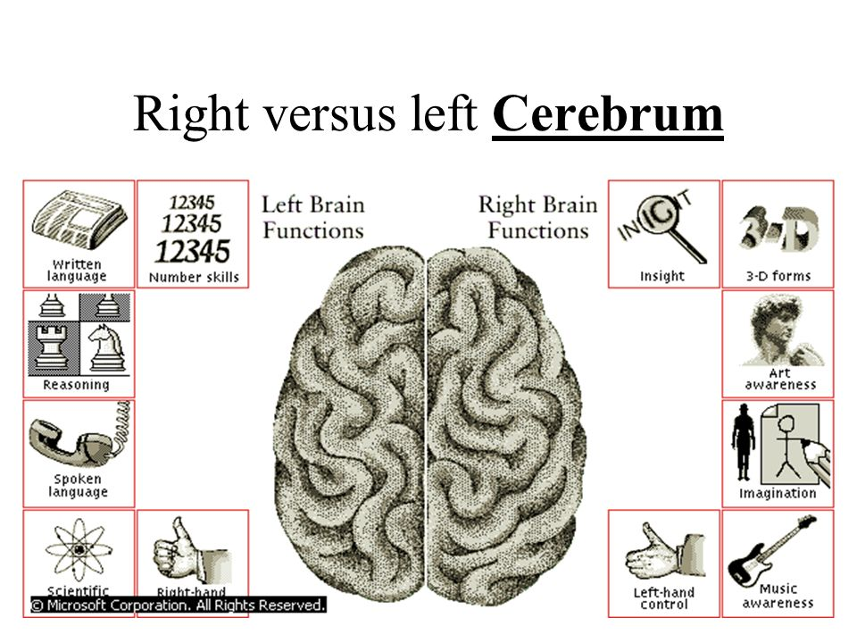 Right versus left Cerebrum