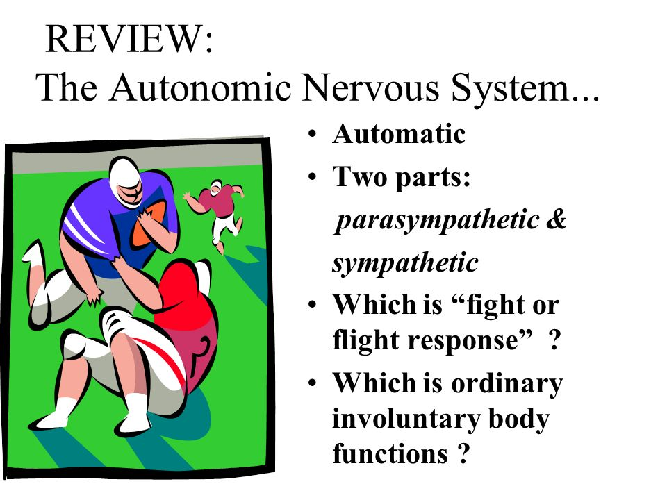 REVIEW: The Autonomic Nervous System...