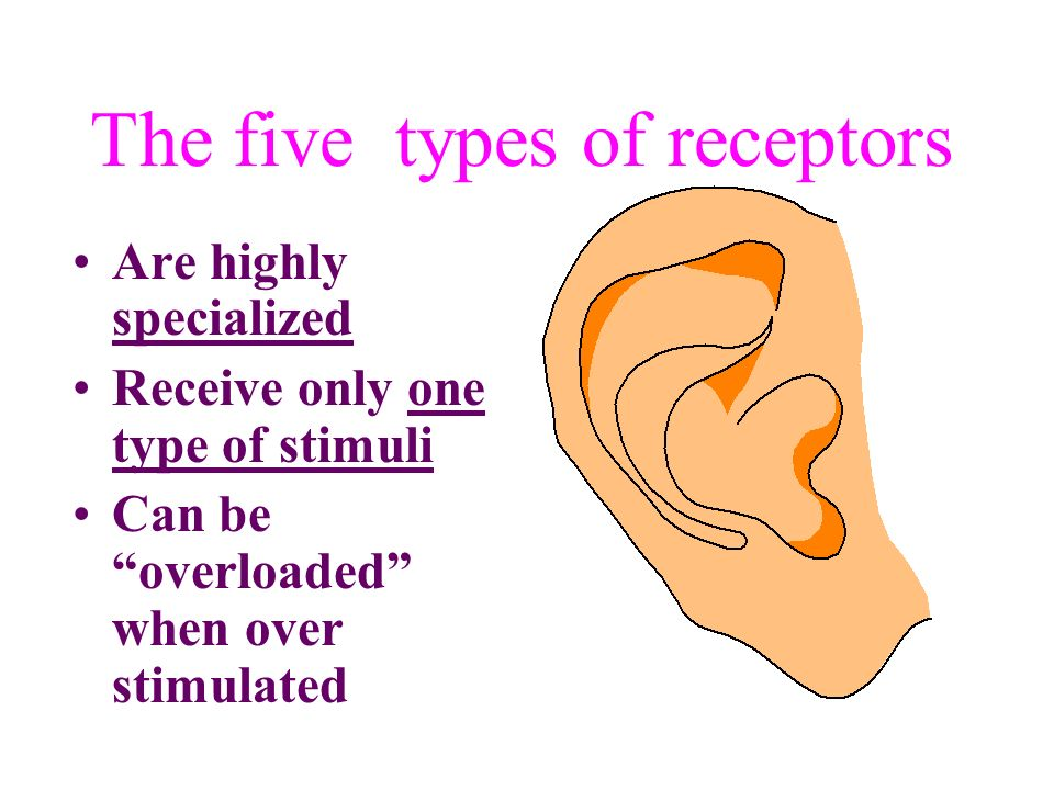 The five types of receptors
