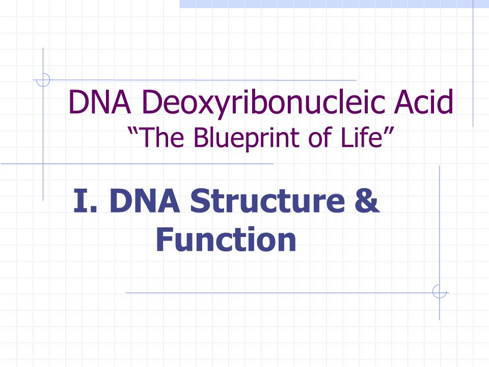 Dna deoxyribonucleic acid the blueprint of life ppt download 1 dna deoxyribonucleic malvernweather