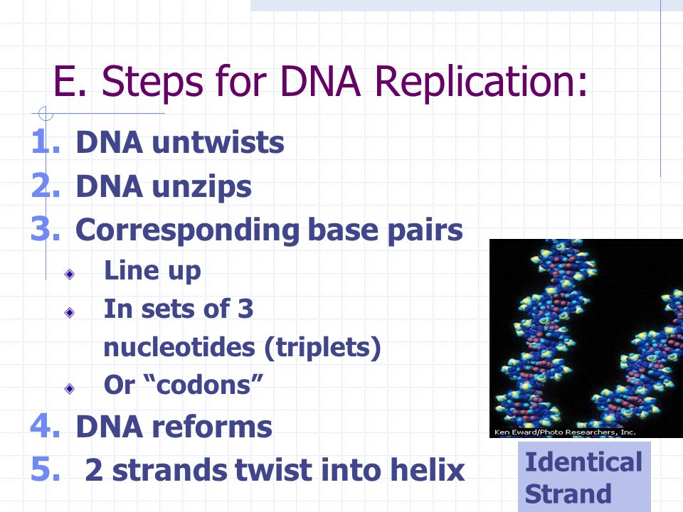 E. Steps for DNA Replication: