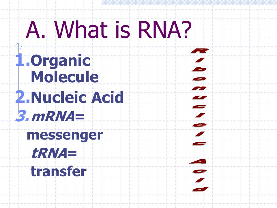 A. What is RNA Organic Molecule Nucleic Acid mRNA= Ribonucleic Acid