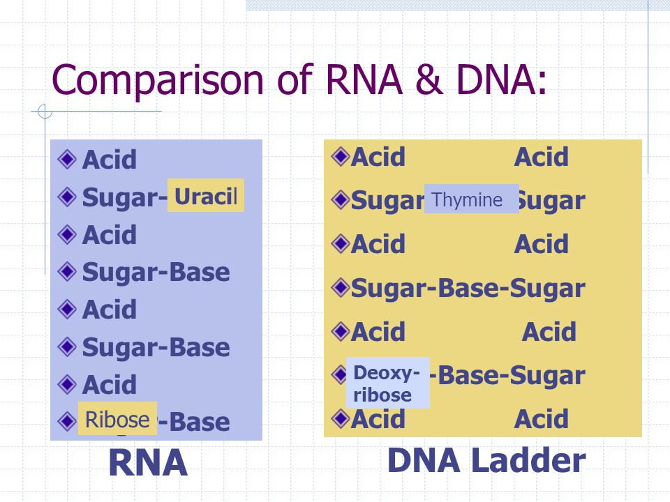 Comparison of RNA & DNA: