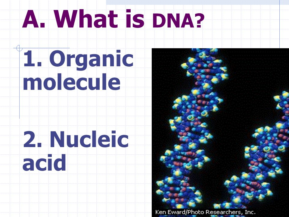 A. What is DNA 1. Organic molecule 2. Nucleic acid
