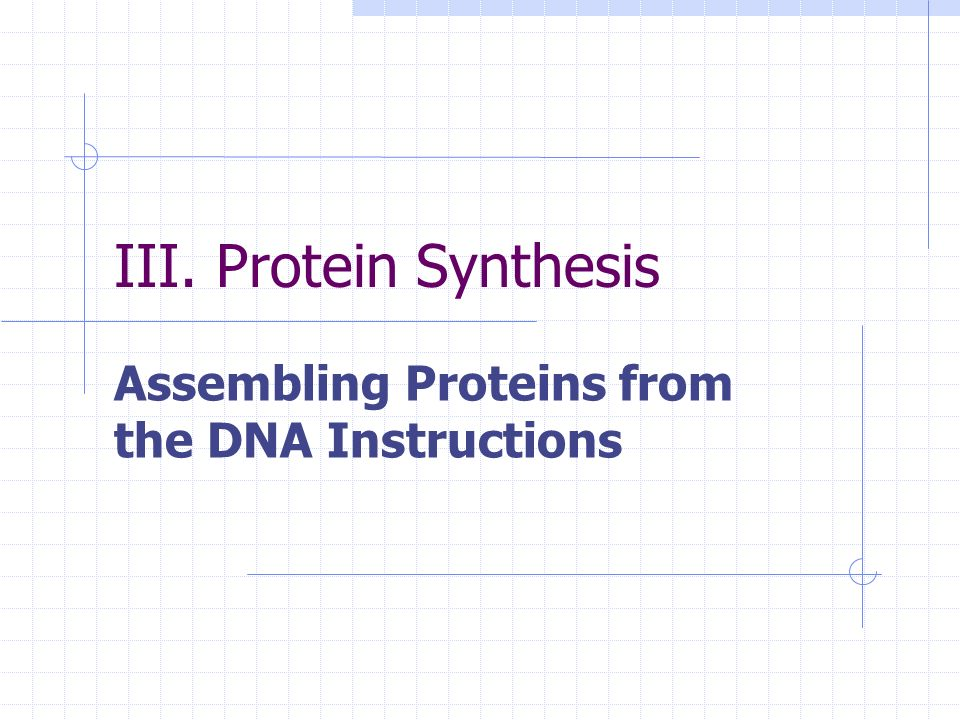 Assembling Proteins from the DNA Instructions