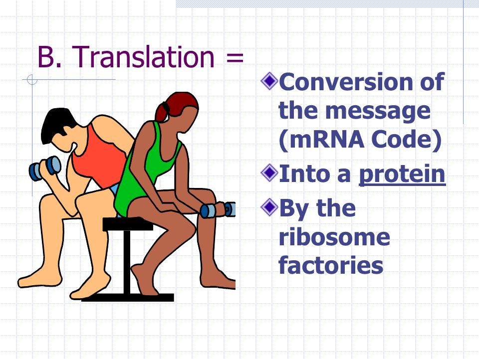 B. Translation = Conversion of the message (mRNA Code) Into a protein