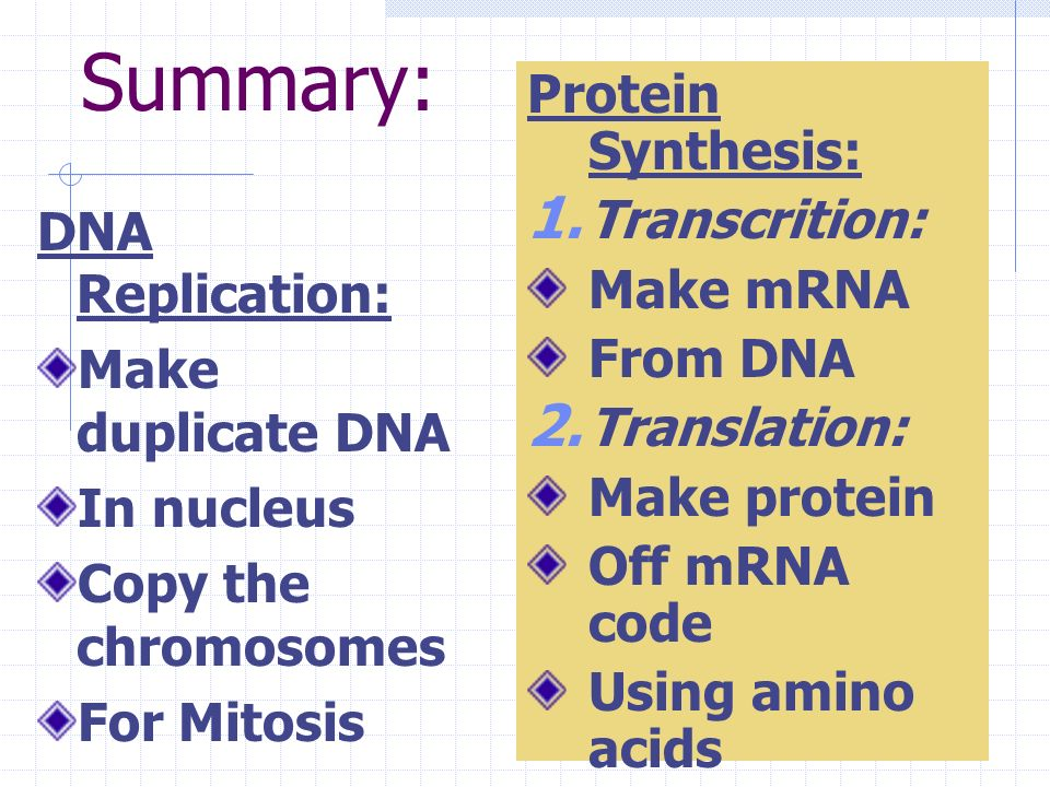 Summary: Protein Synthesis: Transcrition: Make mRNA From DNA