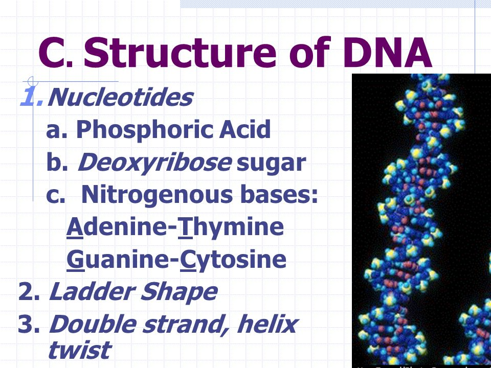 C. Structure of DNA Nucleotides a. Phosphoric Acid