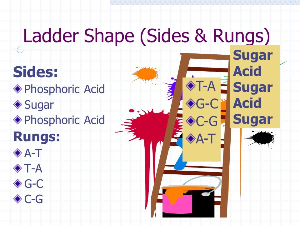 Ladder Shape (Sides & Rungs)