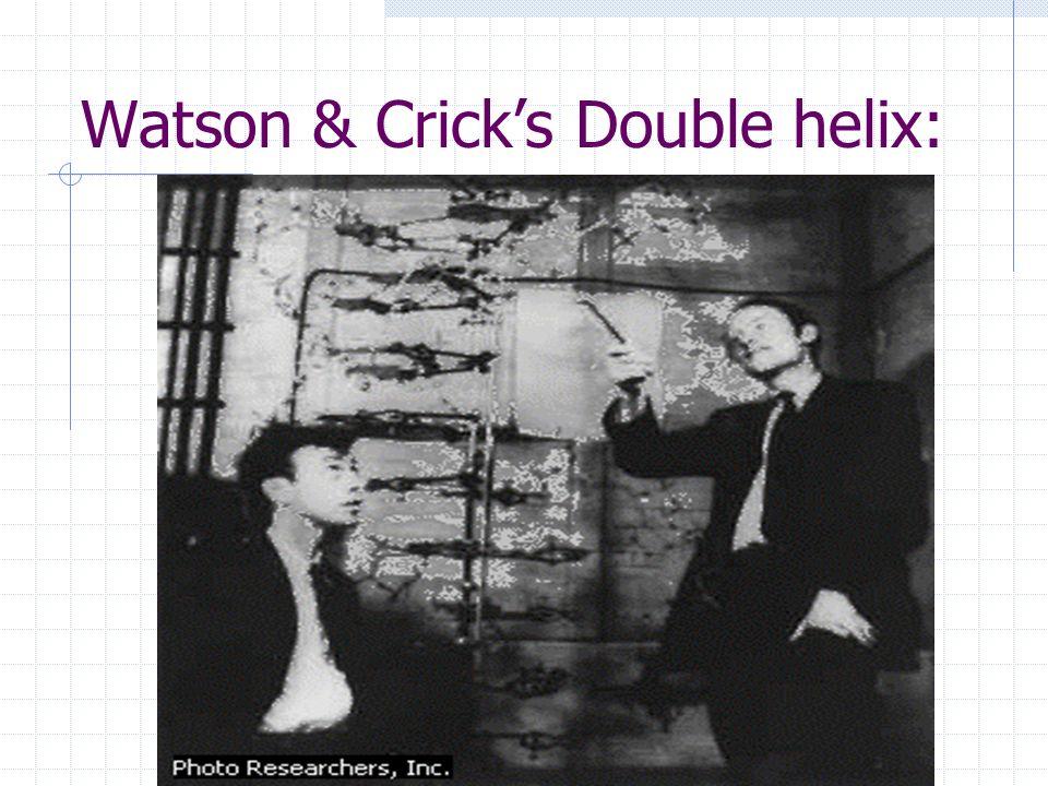 Watson & Crick's Double helix: