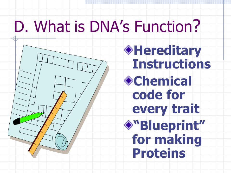 D. What is DNA's Function