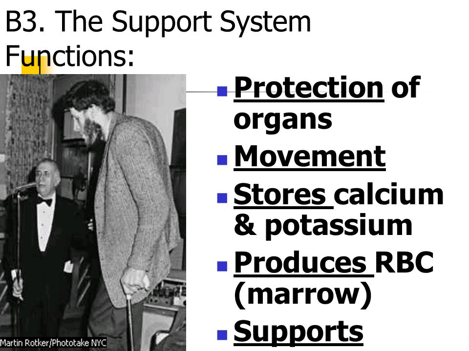 B3. The Support System Functions: