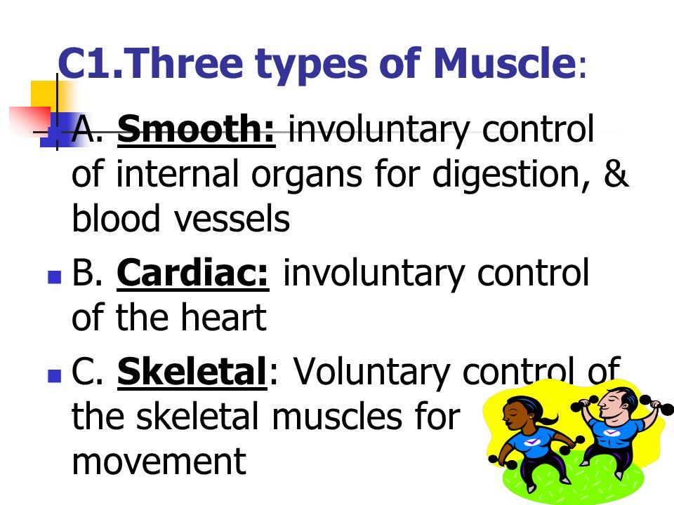 C1.Three types of Muscle: